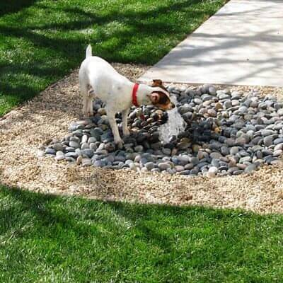 Pet Fountains by California Waterscapes